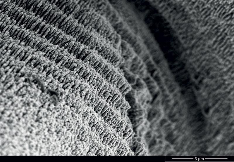 6. Esempio di strutture superficiali periodiche (LIPSS) realizzate con i laser Fluence su carbonio. (©Fluence)