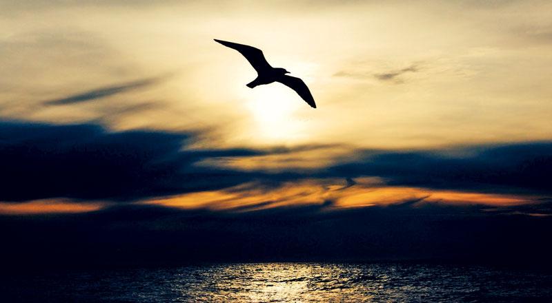 1. Fotografia esemplificativa di un gabbiano. credit:pixabay.com
