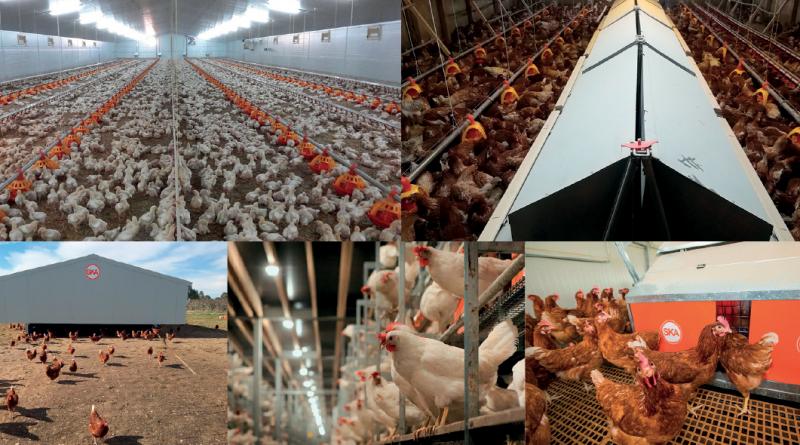 Quanta tecnologia dietro gli impianti avicoli biologici chiavi in mano